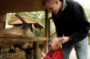 petting-zoo-1398807-300x199