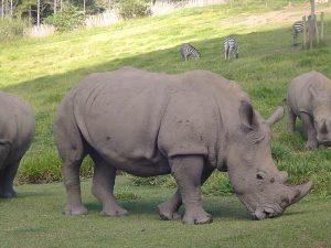 wild-animals-2-1394520-300x225