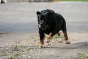 dog-1308054-300x200