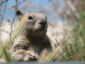 squirrel-1397283-300x225